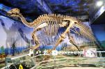 黑龙江省地质博物馆20日恢复开馆 带身份证可免费参观