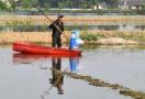 稻田里撑船