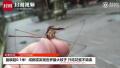 成都或现世上最大蚊子 网友:真怕它吸死我