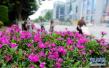 周六28℃!气温将一路走高 北京开启夏天模式!