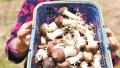 洛阳市新安县刘河村:小小食用菌 为贫困户带来新希望