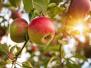 针对苹果期货价格波动 郑商所将要加强监管