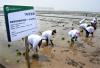 青岛海水稻在六大试验基地同时插秧试种