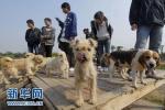 石家庄:小区内不文明养犬现象时有发生