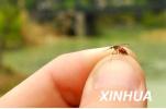 北京报告14例登革热病例 均为境外输入本土传播风险低