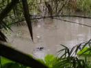 强降雨致鳄鱼逃跑、大桥被淹、美女被救?都是假的,别再信了!