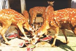 高温炎热 南阳人民公园动物防暑降温有妙招