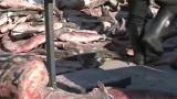 吉林 年年有鱼 查干湖冬捕进行时