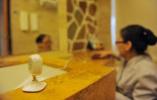 深圳严查酒店卫生状况:立案53宗,星级酒店或被降级