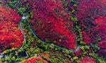 红叶谷秋色
