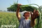 河北平泉贫困户:双手创造幸福生活