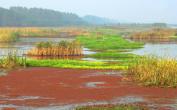 徐州市规划2960平方公里生态红线区
