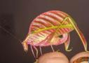 神奇的动物在这里!有的像魔法帽,有的像油条...