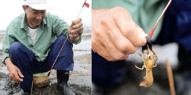 青岛老渔民教你用毛笔钓蝼蛄虾 一钓一大筐