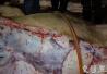 7人生产销售注水牛肉近60吨 销售金额达270余万