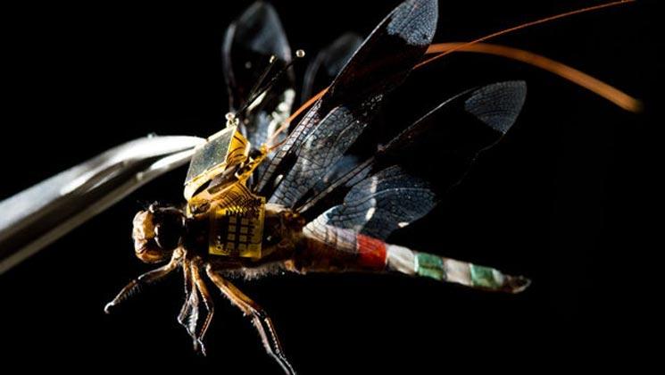 美成功将蜻蜓变为可操控活体无人机 未来或被