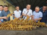 8部门集中整治郑州烟草市场 都有哪些亮点