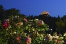 北京景山夜赏牡丹