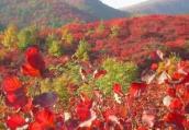 初夏时节的英雄桐柏:红色生态游如火如荼