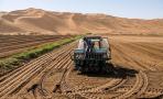 万亩沙漠里的稻田