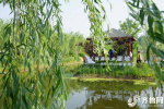 聚焦任城乡村振兴:美丽乡村带动美丽经济打造田园综合体新模式