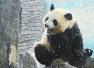 北京现高温天气 动物园大熊猫如何防暑降温?