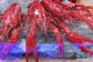 自制小龙虾传上网点赞过万:吃完却连续发烧四天
