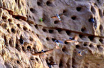 河南许昌:生态环境保护好,超万只崖沙燕来筑巢!