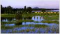 济南黄河国家湿地公园将开建 再建12条跨黄桥隧