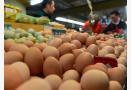 山东鸡蛋价格继续回落 蛋价进入季节性下跌周期