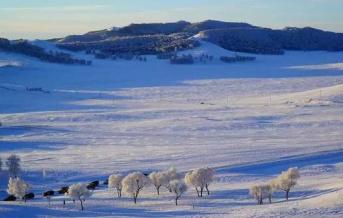 想在大雪中撒欢 选择乌兰布统