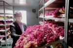 洛阳西工区牡丹产业发展势头强劲