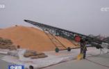 """我国""""口粮绝对安全""""有充足家底 完成中晚稻收购2208万吨"""