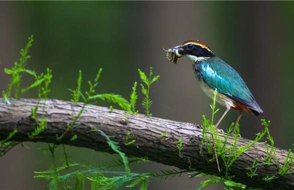 """""""鸟类天堂""""董寨国家级自然保护区 一批鸟类晋级""""国保"""""""